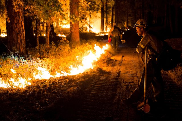 "A member of the Fulton Hotshots watches a controlled burn on the so-called ""Rough Fire"" in the Sequoia National Forest, California, August 21, 2015. (Photo by Max Whittaker/Reuters)"