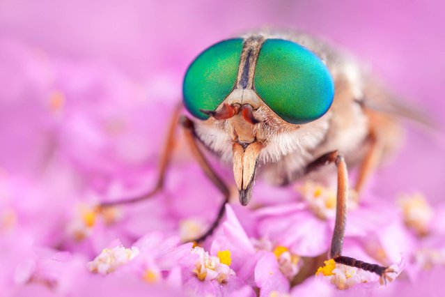 A macro shot of an insect. (Photo by Alex Hyde/Wildscreen Photography Festival 2014)
