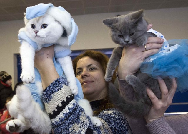 "Women hold dressed cats during the exhibition ""Autumn-2014"" in Minsk, November 23, 2014. (Photo by Vasily Fedosenko/Reuters)"