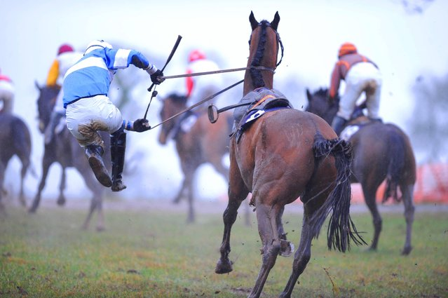 Jockey Danny Fitzsimons parts comapny with Surprise Witness, UK, on March 9, 2013. Thankfully both were ok afterwards. (Photo by Healy Racing)