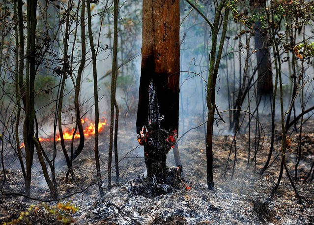 The burnt-out trunk of a tree is seen in a forest near the village of Zdorovie, Russia, on August 10, 2010. (Photo by Viktor Drachev/AFP/Getty Images)