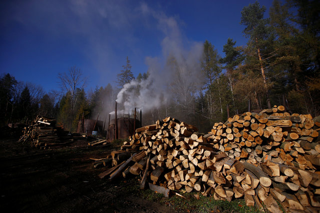 Stacks of wood are seen near a charcoal furnace at a charcoal making site in the forest of Bieszczady Mountains near Baligrod village, Poland October 28, 2016. (Photo by Kacper Pempel/Reuters)