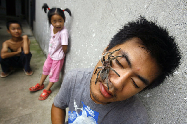 A Chilean rose tarantula walks over the face of Zhao Jing on a street in Wuhan, Hubei province, China on July 30, 2009. Zhao, 26, a Zoo feeder, keeps tarantulas, scorpions and pythons as pets. (Photo by Reuters)