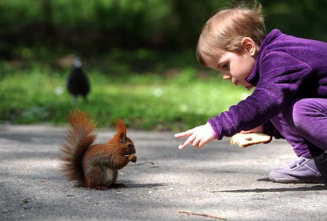 Since there are no bunnies to be seen a young boy feeds a brown squirrel with some bread cumbrs during his visit to the Royal Lazienki Park in Warsaw,  Easter Monday, Poland, 21 April 2014. (Photo by Grzegorz Jakubowski/EPA)