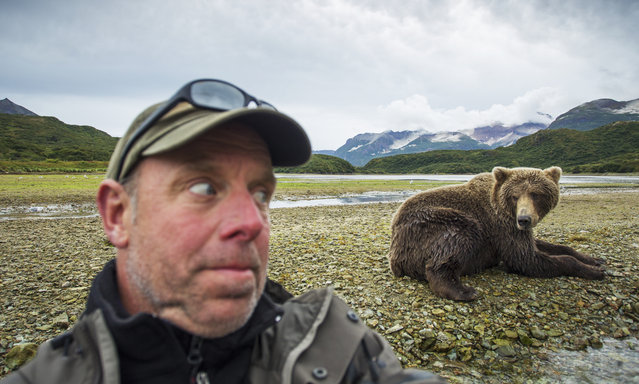 American photographer Paul Souders takes a selfie with a grizzly bear near a salmon spawning stream in Katmai National Park, Alaska. (Photo by Paul Souders/Getty Images/Design Pics/First Light)