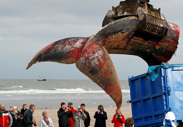 The tail of a stranded whale is pictured on the beach of De Haan, Belgium on October 25, 2018. (Photo by Francois Lenoi/Reuters)