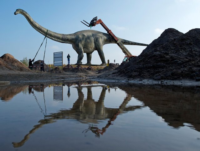 "Workers transport a model of a dinosaur  at the exhibition ""World of Dinosaurs"" at a former lignite surface mining area  in Grosspoesna near Leipzig, central Germany, Wednesday, October 29, 2014. (Photo by Jens Meyer/AP Photo)"