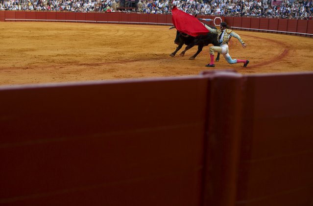 Spanish matador Juan Jose Padilla performs a pass to a bull during a bullfight at The Maestranza bullring in the Andalusian capital of Seville, southern Spain April 25, 2015. (Photo by Marcelo del Pozo/Reuters)
