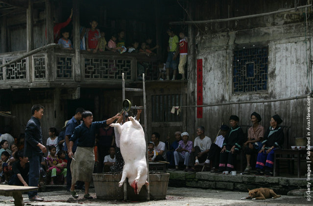A butcher slaughters a pig