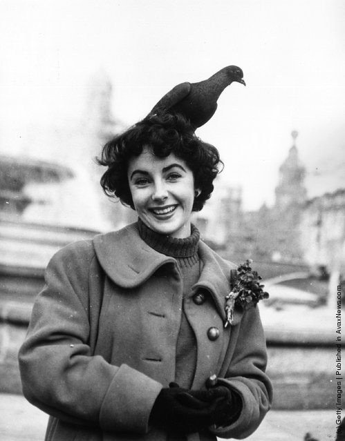 1948: Elizabeth Taylor feeds the pigeons in Trafalgar Square, London