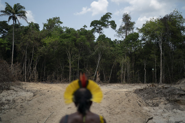 Krimej indigenous Chief Kadjyre Kayapo, of the Kayapo indigenous community, looks out at a path created by loggers on the border between the Biological Reserve Serra do Cachimbo, front, and Menkragnotire indigenous lands, in Altamira, Para state, Brazil, Saturday, August 31, 2019. Much of the deforestation in the Brazilian Amazon is done illegally – land grabbers burn areas to clear land for agriculture and loggers encroach on national forests and indigenous reserves, and Kayapo says he does not want loggers and prospectors on his land. (Photo by Leo Correa/AP Photo)