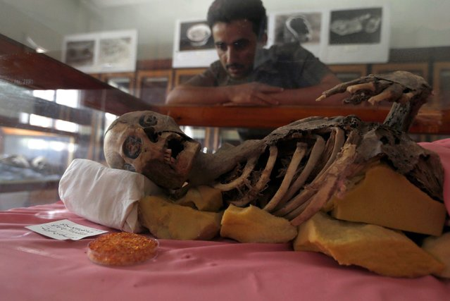 A Yemeni student looks at a millenia-old mummy displayed at Sanaa University, in the Yemeni capital on May 10, 2017. Yemen's war has claimed thousands of lives and pushed millions to the brink of famine – and now the conflict threatens the fate of a collection of millennia-old mummies. With electricity intermittent at best and the country's ports under de facto blockade, experts are fighting to preserve the 12 cadavers in the face of heat, humidity and a dearth of preservative chemicals. (Photo by Mohammed Huwais/AFP Photo)