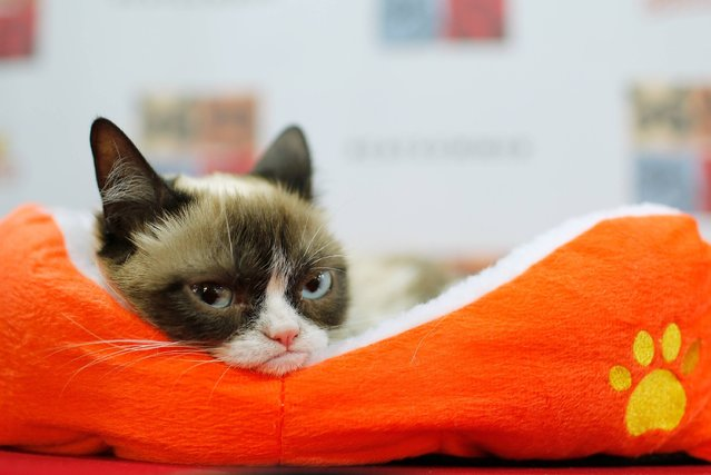 """Grumpy Cat attends the """"Cat Summer"""" video launch party at Bleecker Street Records on July 16, 2014 in New York City. (Photo by Jemal Countess/Getty Images)"""