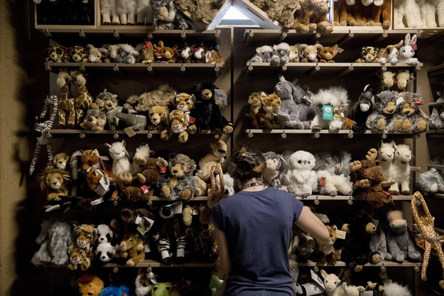 A worker puts out stuffed animals in the gift shop at the Ark Encounter July 5, 2016 in Williamstown, Kentucky. The Ark Encounter is a theme park centered around a 510 foot long reproduction of Noah's Ark. (Photo by Aaron P. Bernstein/Getty Images)
