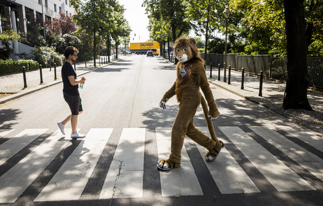 A delegate dressed in a furry Lion costume walks across a Zebra crossing to the convention centre at the Eurofurence convention in Berlin on August 17, 2017. Some 2700 delegates are taking part in the 3-day-long Eurofurence in the German capital, the worlds oldest active Furry-convention for people dressing up in furry costumes. (Photo by Odd Andersen/AFP Photo)