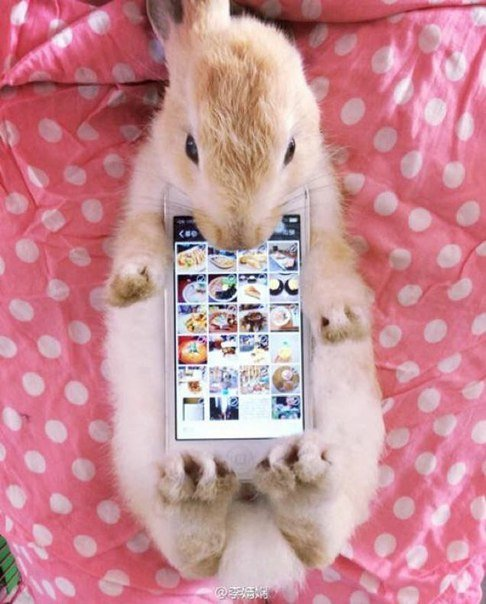 The Japanese Use A Real Rabbits As Case For Smartphone