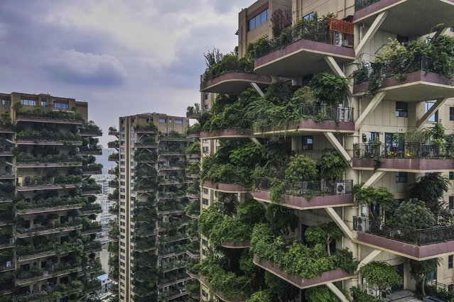 A photo taken with a drone shows an aerial view of Qiyi City Forest Garden residential buildings complex in Chengdu, China, 15 September 2020. The Chengdu Qiyi City Forest Garden project was launched in 2018. Residents were promised a modern eco-paradise and specially-designed balconies for growing plants. According to the project's estate agent all apartments were sold out by April 2020. Plants have, however, overgrown as tenants refused to move in after finding out that the plants attracted thousands of mosquitos. Only few families have moved in because of the infestation, state media have reported. (Photo by Sunling/EPA/EFE)