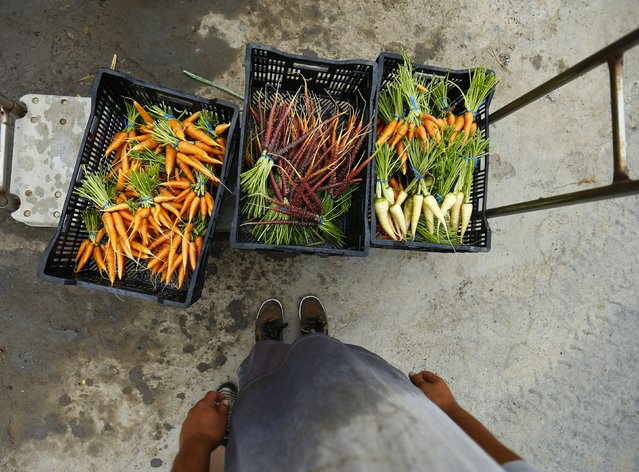 Makoto Chino stands over freshly picked and washed carrots at his family's farm in Rancho Santa Fe, California August 13, 2014. (Photo by Mike Blake/Reuters)
