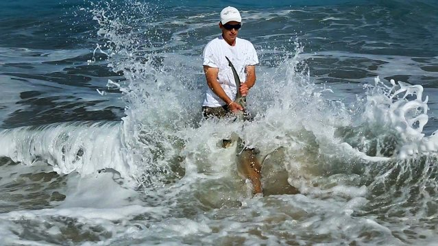 Jorgensen gets ready to release the shark. (Photo by Lannis Waters/Palm Beach Daily News)