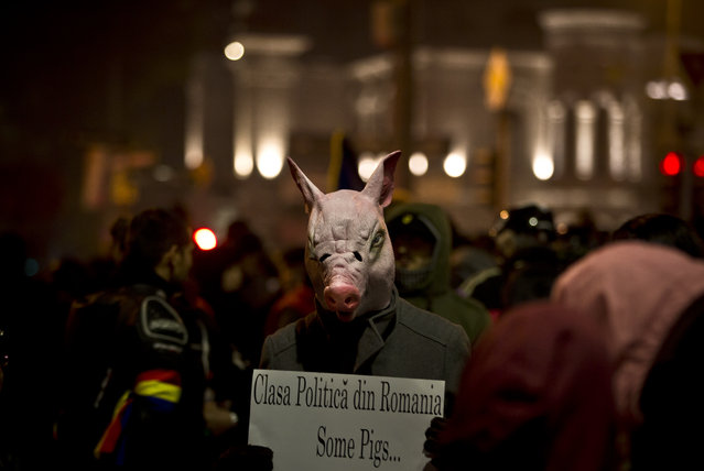 """A man wears a pig mask holding a banner that reads """"The Romanian political class - Some pigs"""" during the fifth day of protests in Bucharest, Romania, Saturday, November 7, 2015, calling for better governance and an end to corruption, in Bucharest, Romania, Nine more people died Saturday, bringing the death toll to 41 victims, a week after the Oct. 30 blaze that erupted at the Colectiv nightclub during a heavy-metal concert. (Photo by Vadim Ghirda/AP Photo)"""