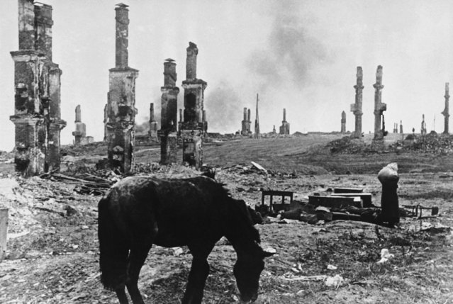 An abandoned horse grazes among the ruins of the Russian city of Stalingrad on December 18, 1942, about four months into the battle for the city on the Volga River between Axis forces and the Soviet army. In the background, at right, Russian women leaving their battered homesteads make their way through the ruins. (Photo by Alvin Steinkopf/AP Photo)