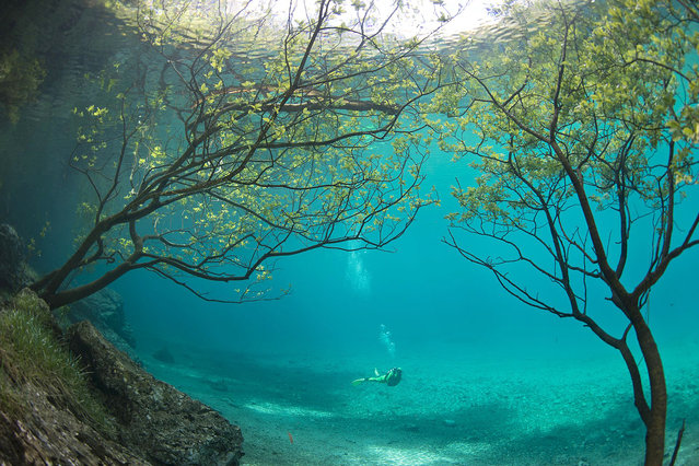 Spectacular images that show how a summer park becomes a lake each spring complete with underwater trees have been captured by two divers. The snaps were taken at the Gruener See, or Green Lake as it is called in English, located in the southern Austrian province of Styria. (Photo by Harald Hois/Europics)