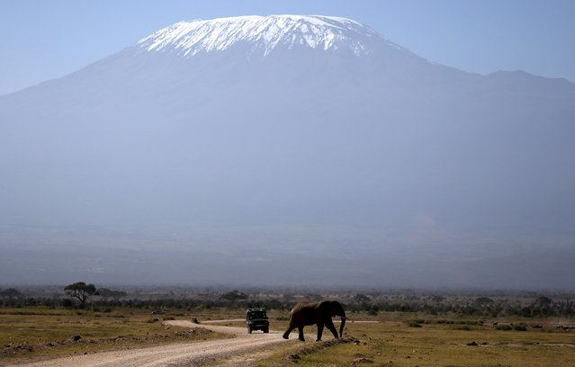 Kilimanjaro is seen behind an elephant in Amboseli National park January 26, 2015. (Photo by Goran Tomasevic/Reuters)