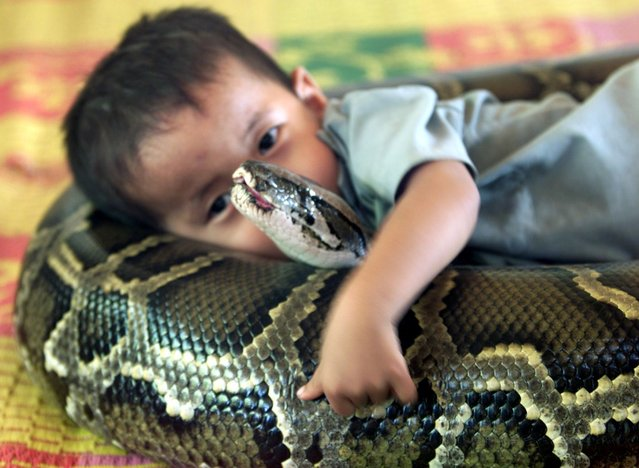 Dah, a small child laying with a 13 foot long python, how sweet. (Photo by Reuters)