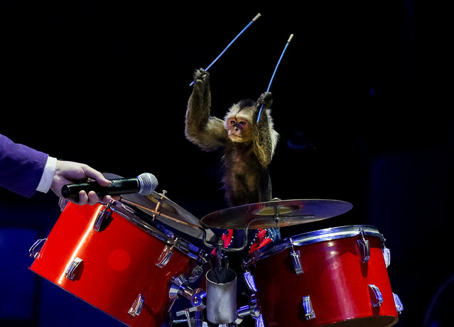 """A monkey performs during the presentation of the new show """"The Show of the Giant Fountains"""" at the National Circus in Kiev, Ukraine September 27, 2018. (Photo by Gleb Garanich/Reuters)"""