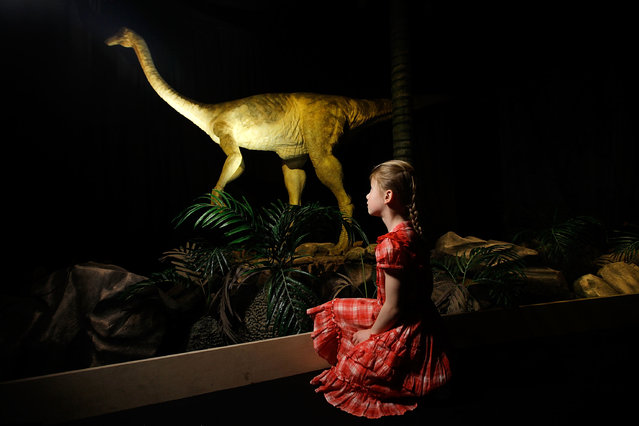 Adele Clark, aged 8, looks at an animatronic Gallimimus dinosaur at the Natural History Museum on April 20, 2011 in London, England. (Photo by Matthew Lloyd/Getty Images)