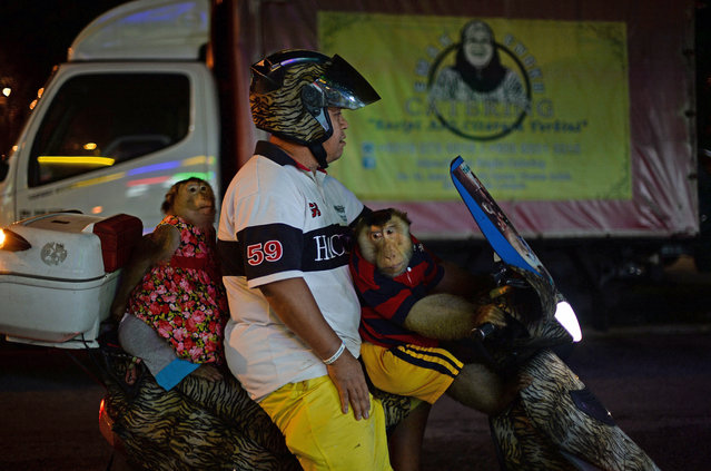 "This photo taken on April 25, 2015 shows Jamil Ismail (Jamilkucing) (C) preparing to ride his motorcycle with his female pet monkey named ""Shaki"" (L) and his pet male monkey ""JK"" (R) after having dinner at a restaurant in Kuala Lumpur. (Photo by Mohd Rasfan/AFP Photo)"