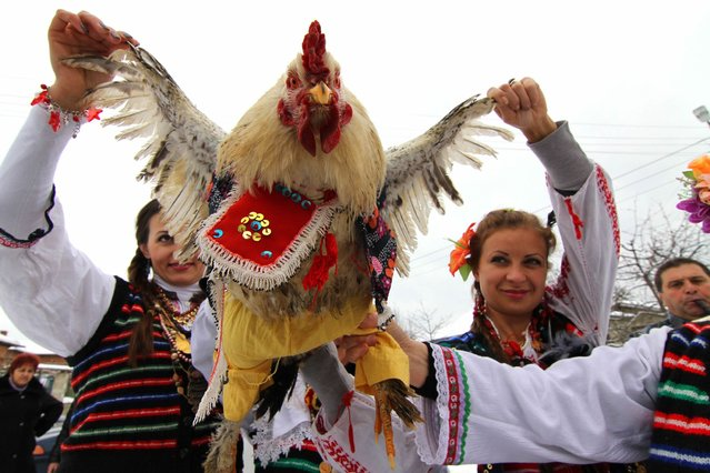 Bulgarian women play and sing as they hold a rooster dressed in trousers in the village of Krivini, east of the Bulgarian capital Sofia, Monday, February 02, 2009, during the Rooster's day celebration when people sacrifice roosters. The feast is is mainly celebrated in the eastern part of Bulgaria for the good health of the small boys. (Photo by Petar Petrov/AP Photo)