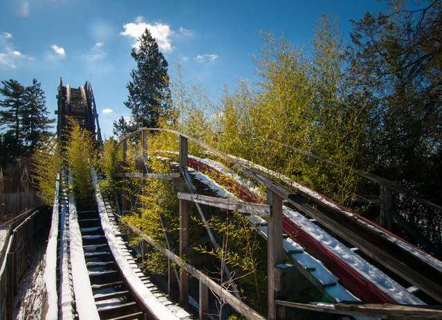 Trees grow amongst the tracks of the ruined Big Dipper roller coaster at Geauga Lake Amusement park in Ohio. (Photo by Jonny Joo/Barcroft Media)