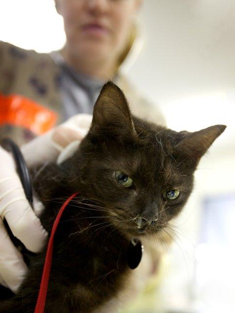 Cats of PetSmart Charities