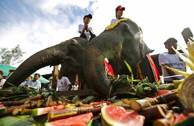Elephants eat fruits and vegetables at Winga Baw Elephant Conservation Camp during the ceremony to mark World Elephant Day at Bago Region, Myanmar, 12 August 2017. Winga Baw Elephant Conservation Camp, 34-hectare former timber camp for logs located in Bago Region, currently has 14 elephants and was opened for recreation for locals as well as for tourists. World Elephant Day is marked annually on 12 August. (Photo by Lynn Bo Bo/EPA/EFE)