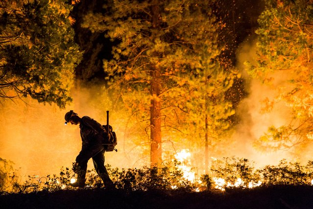 "Fulton Hotshot Michael Turowski lights a controlled burn on the so-called ""Rough Fire"" in the Sequoia National Forest, California, August 21, 2015. (Photo by Max Whittaker/Reuters)"