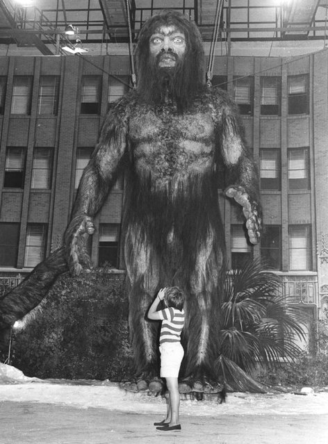 """A huge model of the mythical half-man half-beast creature the yeti, in Rome for the shooting of Frank Kramer's film """"Yeti"""". 18th July 1977. (Photo by Keystone)"""