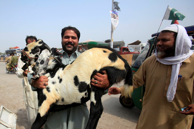 A man carries a goat to his vehicle after he purchased it at the animal market ahead of the Eid al-Adha festival in Peshawar, Pakistan September 12, 2016. (Photo by Fayaz Aziz/Reuters)