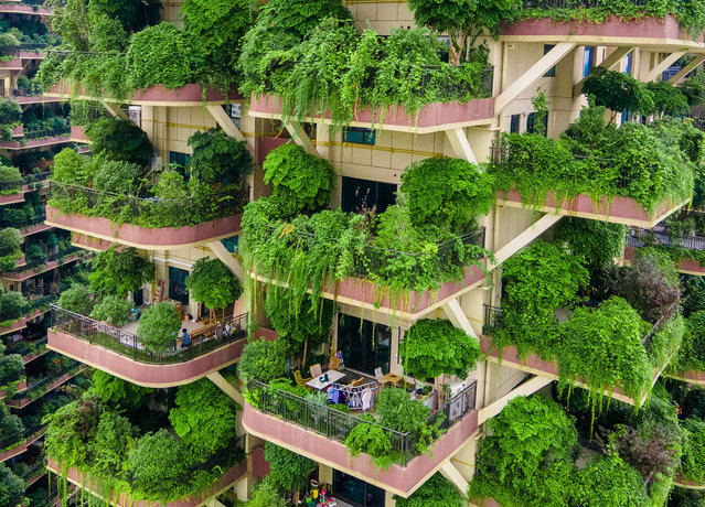 Balconies at Qiyi City Forest Garden residential buildings complex are overrun by plants in Chengdu City, Sichuan Province, China, 15 September 2020. (Photo by Costfoto/Barcroft Media via Getty Images)