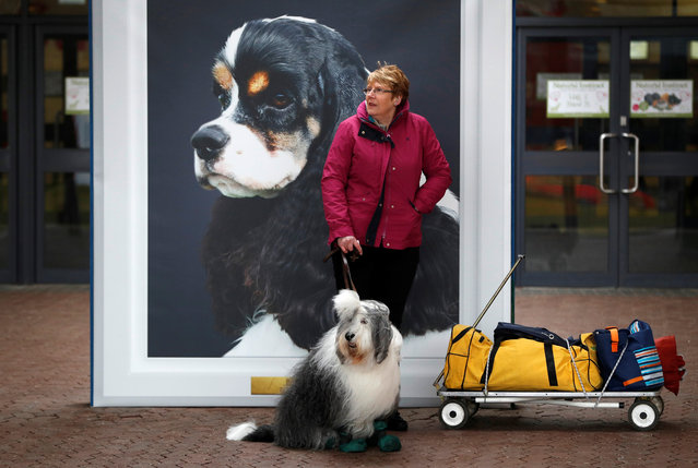 A woman with an Old English Sheep Dog waits for the start of the first day of the Crufts Dog Show in Birmingham, Britain March 8, 2018. (Photo by Darren Staples/Reuters)