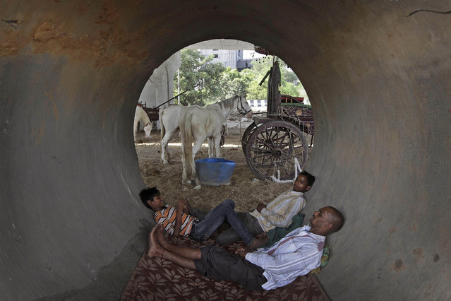 Indian horse cart owners sleep inside a concrete pipe under a flyover, as their horses feed on a hot afternoon in New Delhi, India , Friday, May 24, 2013. The capital city has been reeling under a heat wave with temperature crossing 45 degree Celsius (113 degree Fahrenheit) on Friday. (Photo by Manish Swarup/AP Photo)