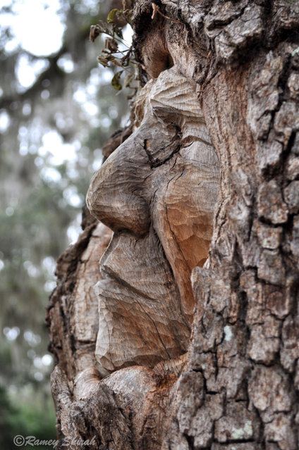 Tree Spirit Carvings by Keith Jennings