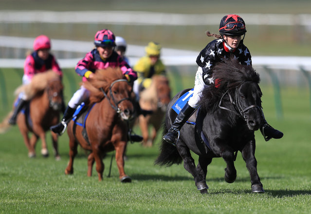 Hollydell Poseidon ridden by Madeline Reader-Smith takes part in the Shetland Pony Grand National Flat Race in Aid of Bob Champion Cancer Trust during day two of the Cambridgeshire Meeting at Newmarket Racecourse on Friday, September 28, 2018. (Photo by Mike Egerton/PA Wire)