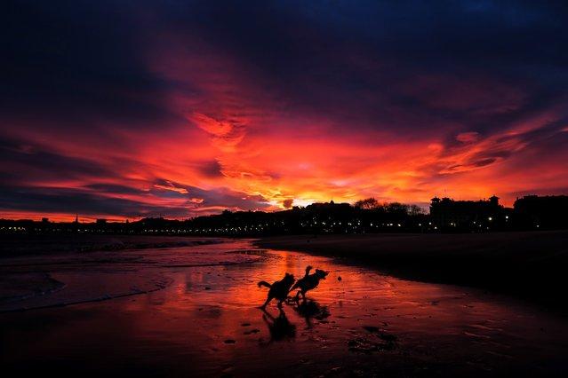 Two dogs play as the sun rises over the beach of Ondarreta in San Sebastian, Spain on December 18, 2018. (Photo by Javier Etxezarreta/EPA/EFE/Rex Features/Shutterstock)