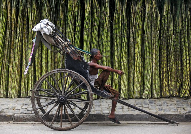 A hand-rickshaw puller waits for customers at a roadside wholesale sugarcane market in Kolkata in this September 16, 2013 file photo. India, the world's biggest sugar producer after Brazil, is expected to produce surplus for the sixth straight year. (Photo by Rupak De Chowdhuri/Reuters)