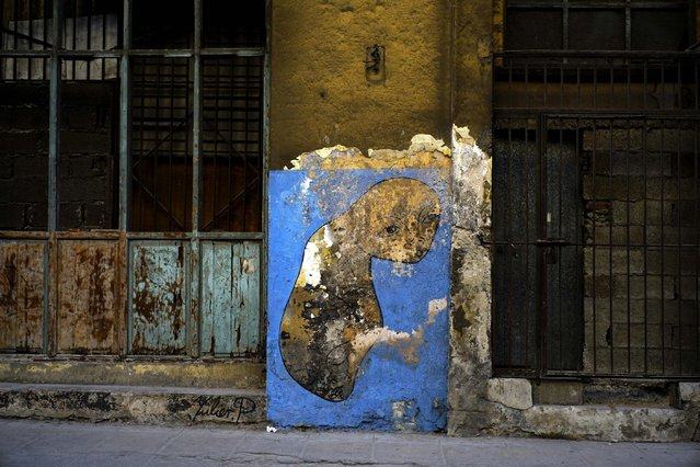 In this February 12, 2017 photo, work of urban artist Yulier P. adorns a wall on a street in Havana, Cuba. The canvas of the The 27-year-old artist, whose full name is Yulier Rodríguez, consists of walls, usually rough, peeling, on buildings or houses that seem to be collapsing or have been abandoned. (Photo by Ramon Espinosa/AP Photo)