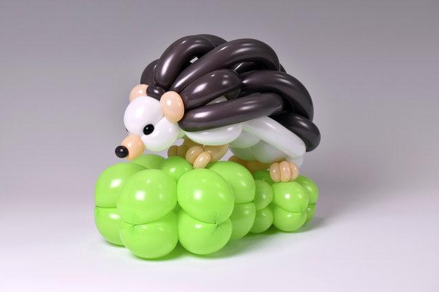 Hedgehog by Masayoshi Matsumoto. (Photo by Masayoshi Matsumoto/Caters News Agency)
