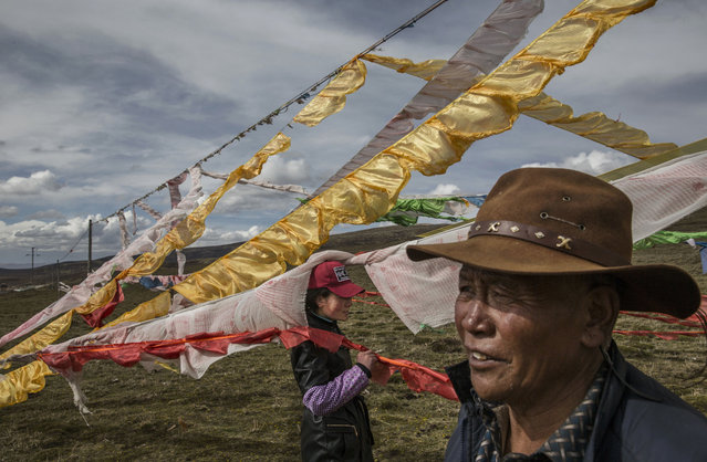 Tibetan nomads woman stand amongst prayer flags placed at their camp for picking cordycep fungus on the 15th day of Saka Dawa, the holiest day of the Buddhist calendar when it is prohibited from harvesting, on May 21, 2016 near  Sershul on the Tibetan Plateau in the Garze Tibetan Autonomous Prefecture of Sichuan province. (Photo by Kevin Frayer/Getty Images)