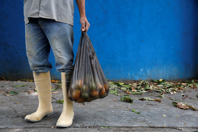 A worker holds a bag filled with mangoes after plucking them from a tree in Caracas, Venezuela, June 6, 2016. (Photo by Carlos Garcia Rawlins/Reuters)
