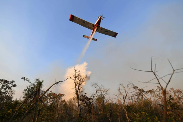 A firefighter plane helps in the effort to put out a forest fire in the northern area of Brasilia's National Park (PNB), in Brasilia on August 30, 2017. The PNB extends through 42,000 hectares amid Brasilia's urban area, where no rain has fallen in 100 days and the relative air humidity reaches 10%. (Photo by Evaristo Sa/AFP Photo)